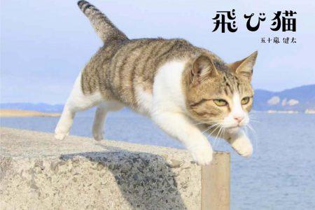 飛び猫写真展in新潟県長岡市