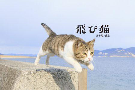 飛び猫写真展in錦糸町オリナス