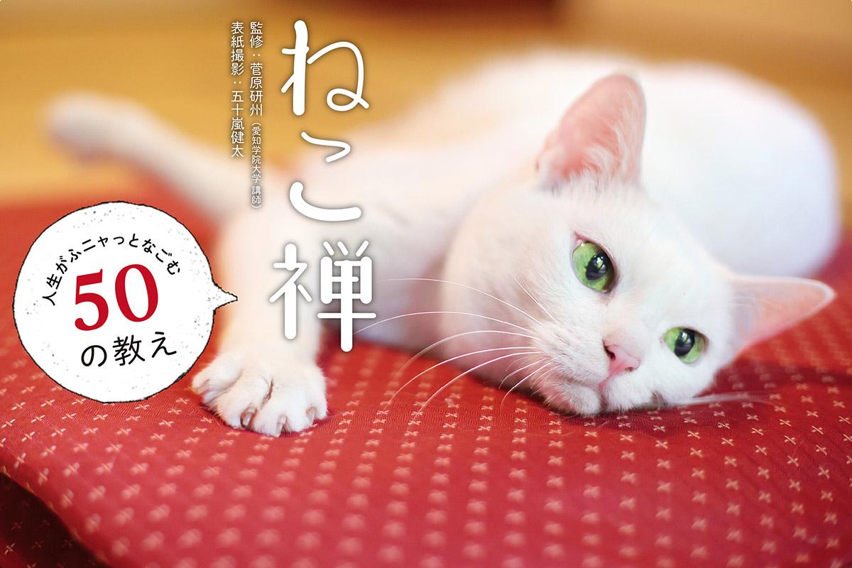 五十嵐健太 飛び猫